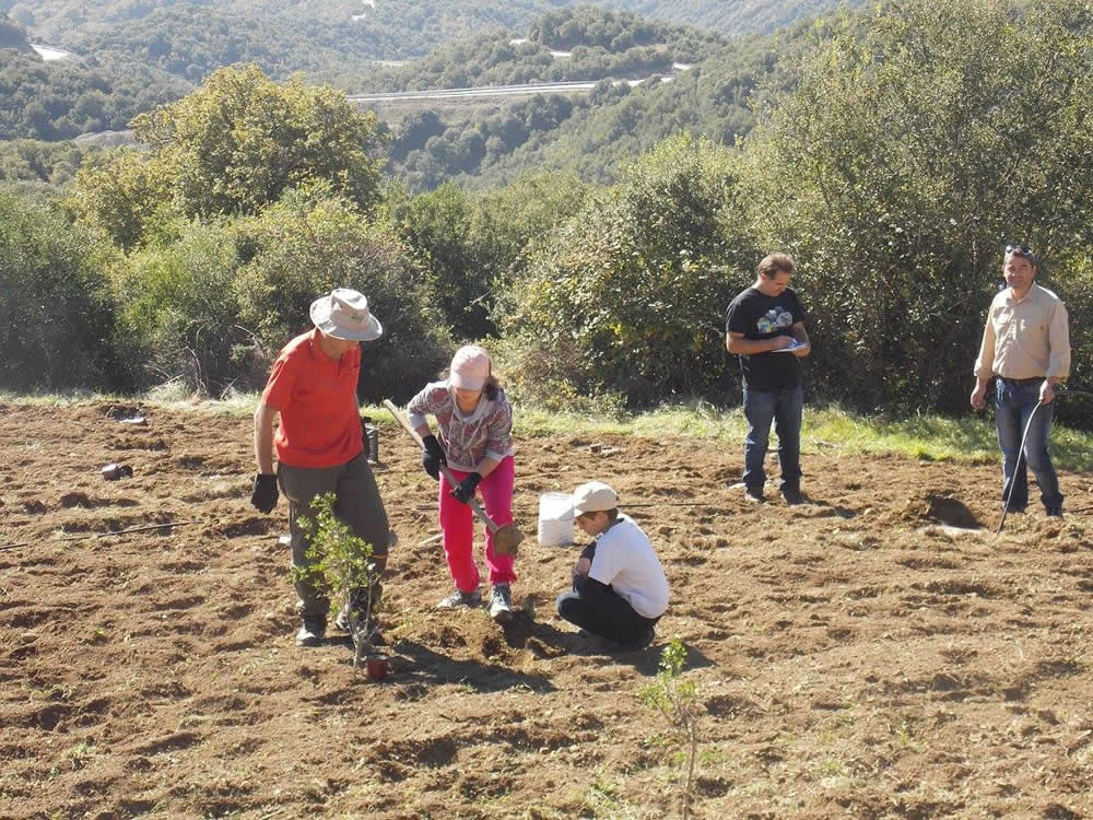 In Epirus and more specifically in Demati village Eastern Zagori, we have planted oak trees inoculated with truffles that will take 3-4 years to fruition. The inoculation was done by the team of Troufa Club. Out of the many varieties of truffles that can be found in the wild some are worthwhile cultivating in controlled environments. The sizes of these truffles may vary in weight between 5-10gr up to 1-1,5kg!
