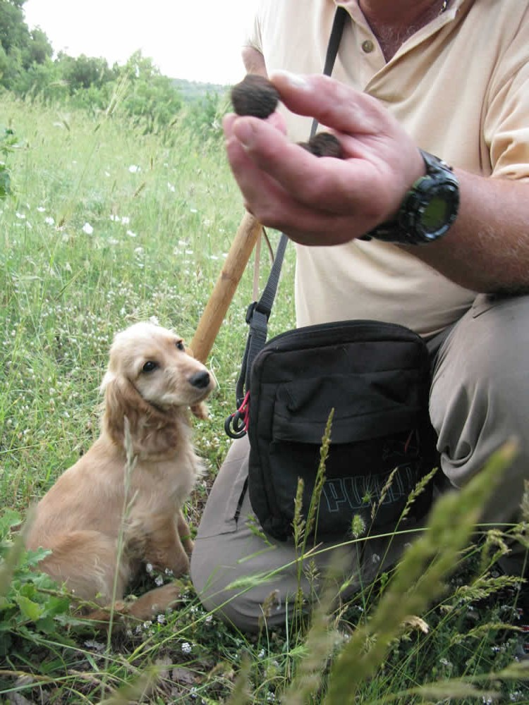 Black summer truffles discovered by our dogs during one of our truffle safaris in the region of Zagorochoria in Ioannina, Greece