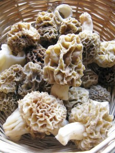 Wild mushroom hunting is an outdoors activity that takes palce in Spring and Autumn when the rainfalls and small fluctuations between daily and night temperatures favour the growth of the fungi